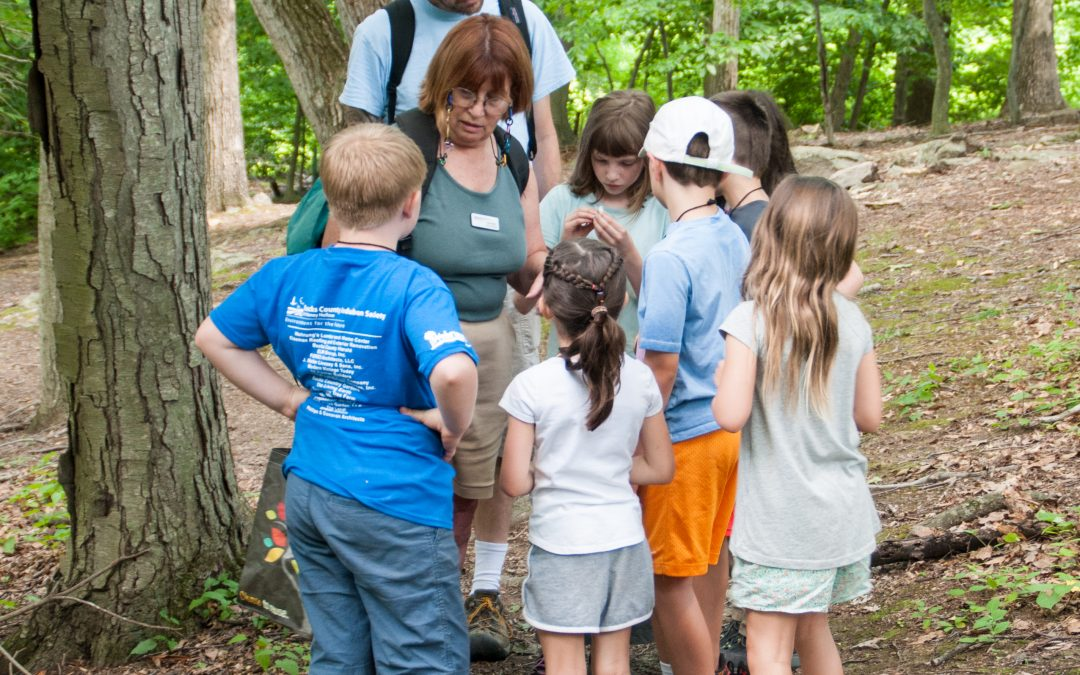 Summer Camp – Going Buggy!