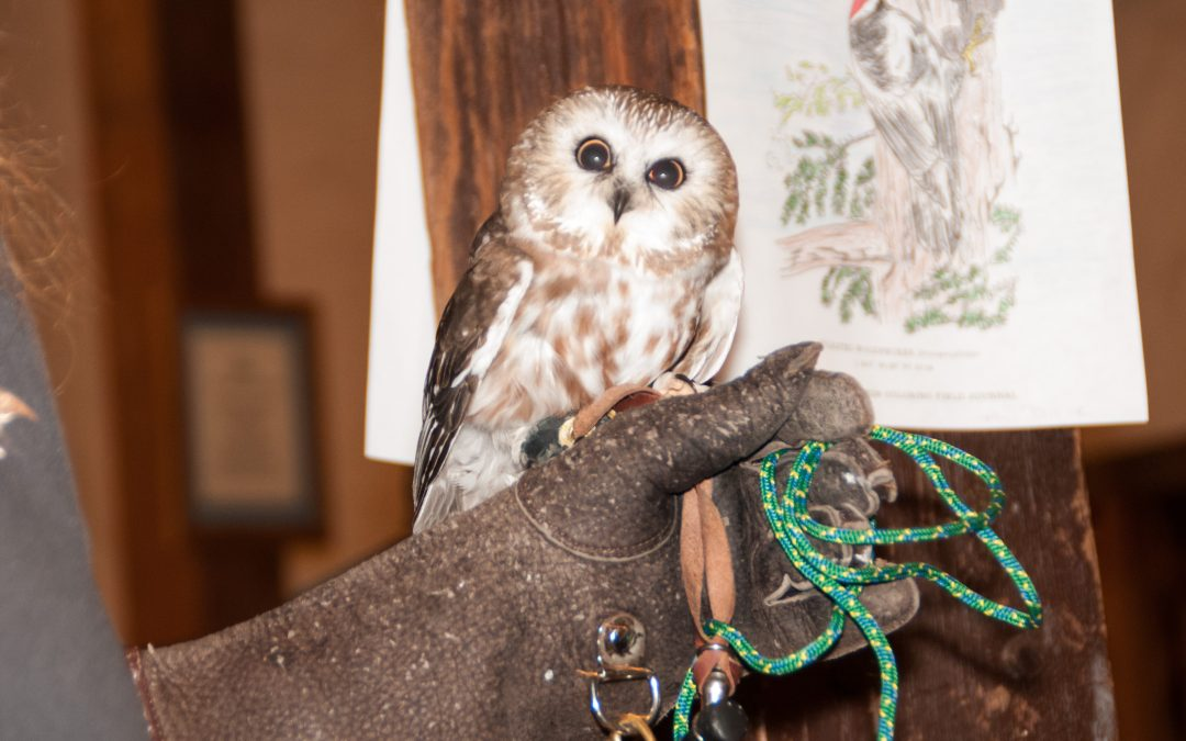 Owl Prowl & Night Hike – SOLD OUT
