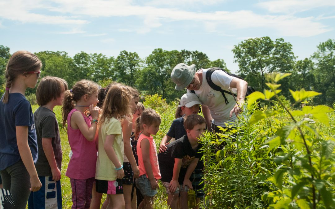 Summer Camp – What's the Buzz?