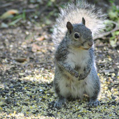 squirrel mom